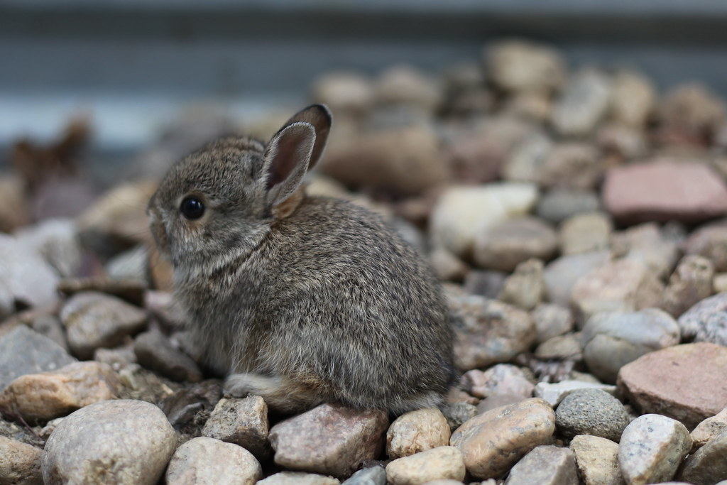 Cute Baby Feet Wallpaper Baby Bunny Rescue 2 We Rescued Another Baby Bunny From
