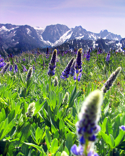 White Flower Wallpaper 3d Cashmere Mountain Meadow Looking At Dragontail From A