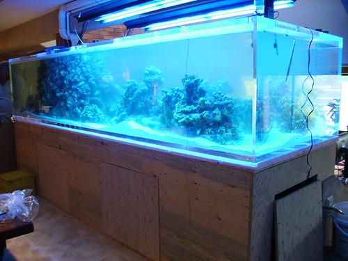 5 gallon fish tank 600 ar 600 21 39 39 high aquascape 8 for 5 gallon fish tank walmart