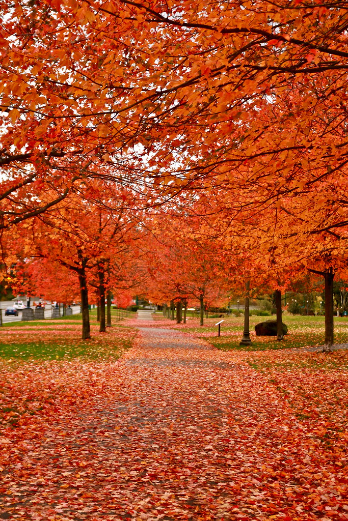 Free Mobile Fall Wallpapers Fall 2008 In Vancouver Canada No Photoshop Beleza Natur