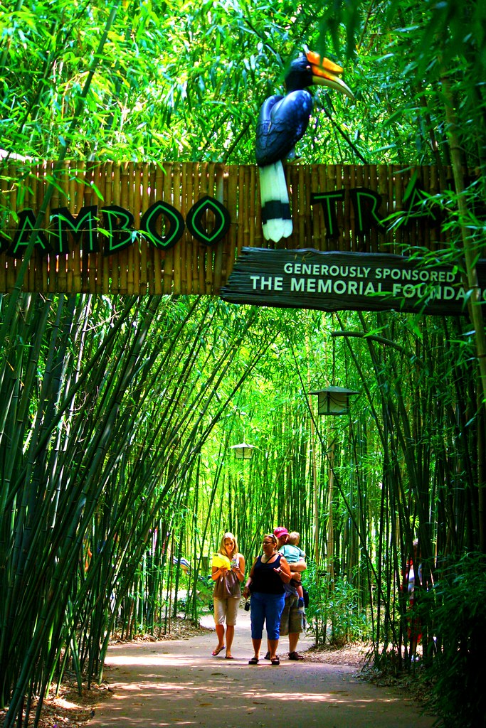 Falling In Love The Bamboo Trail | The Nashville Zoo At Grassmere