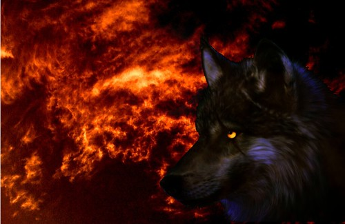 3d Ice Wolf Wallpaper Fire Wolf This Was Created By Jeremy In Photoshop