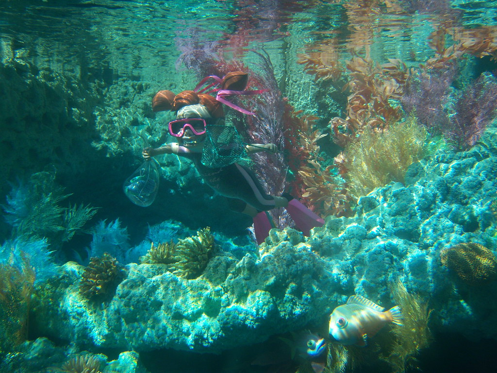 Finding Nemo Wallpaper 3d Darla Scuba Diving At Finding Nemo Submarine Voyage Flickr
