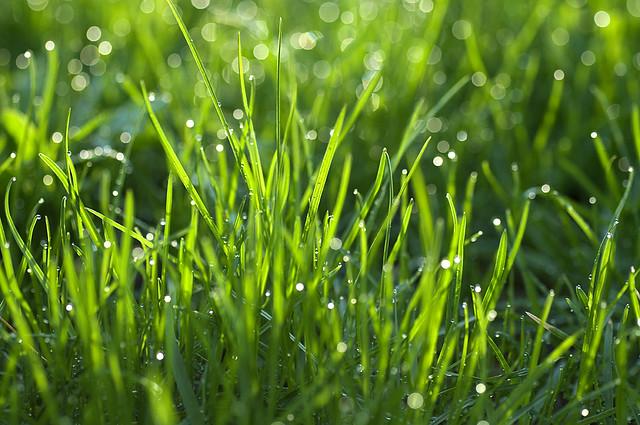Rain Drop Wallpaper Hd Grass After The Rain View On Black Mikko Lagerstedt