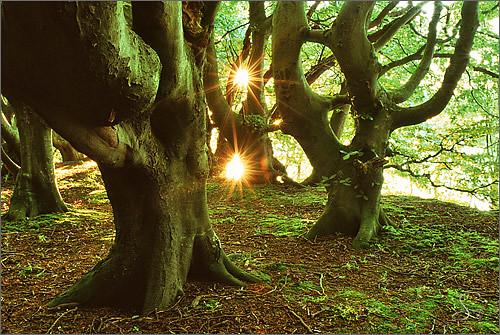 World Beautiful Girl Wallpaper Fairy Tale Forest Island Of R 252 Gen Sandra Bartocha Flickr