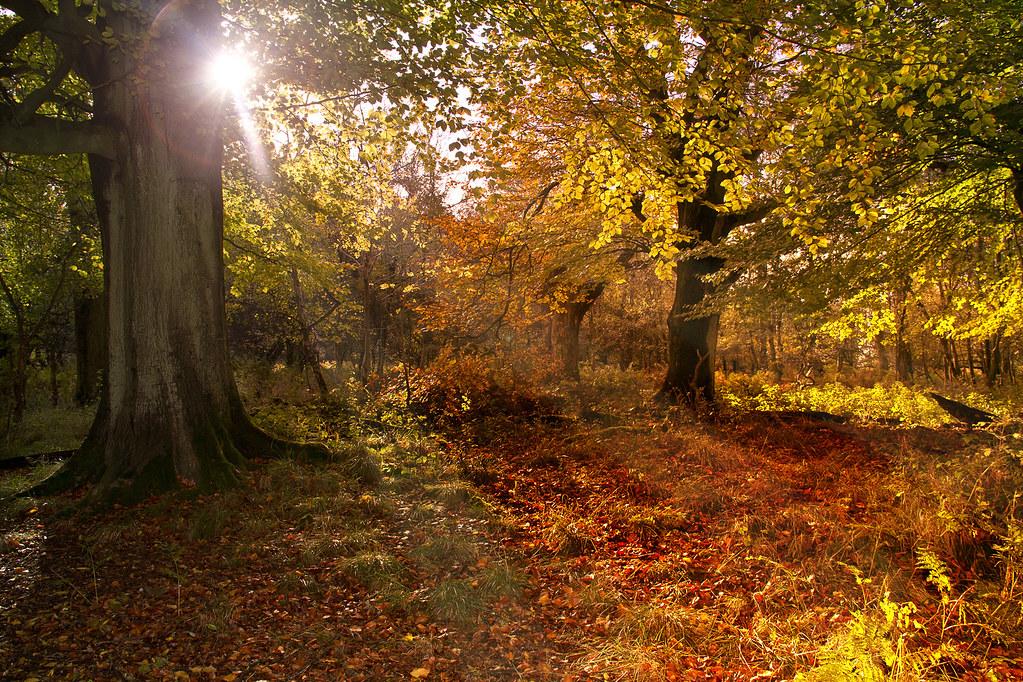 N 3d Wallpaper Autumn Woodland Nov 2013 Lakes4life Flickr