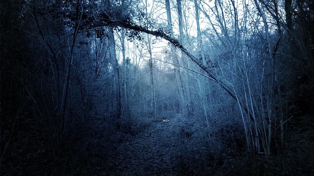 Fall Hd Wallpaper Free Di Notte Nel Bosco Max Short Flickr