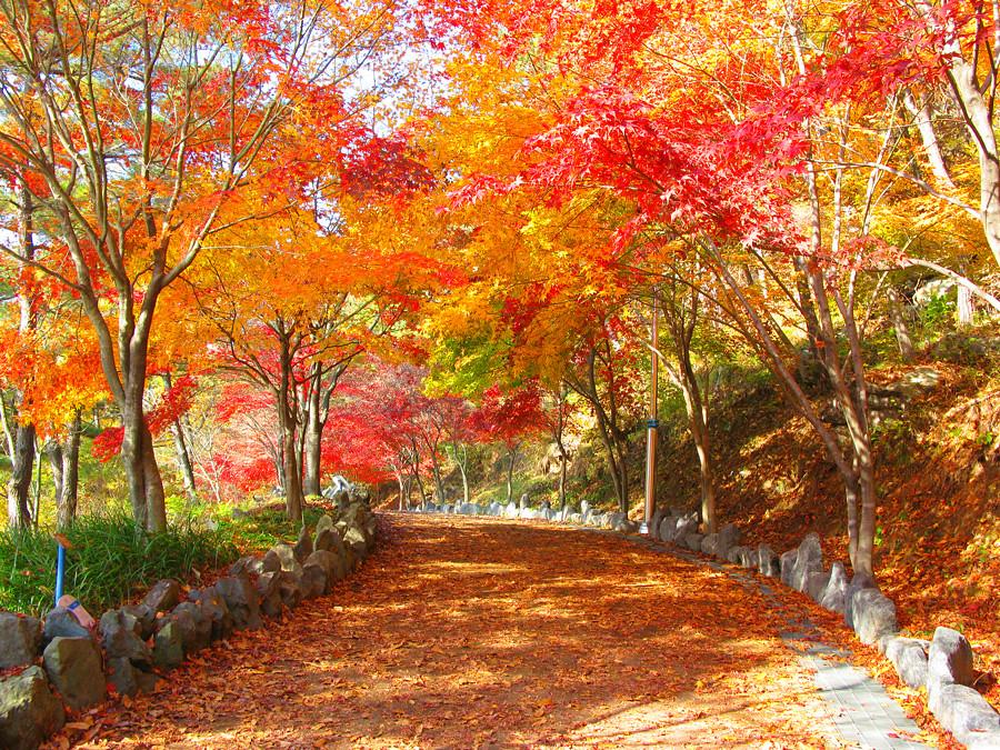 Vermont Fall Foliage Wallpaper 단풍 By Insoo Won 고즈넉한 단풍길 본사진은 Cc Photo Amp Share 캠페인