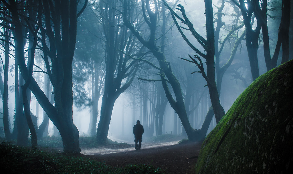 3d Forest Wallpaper Backgrounds Mysterious Forest Sintra Portugal James Mills Flickr