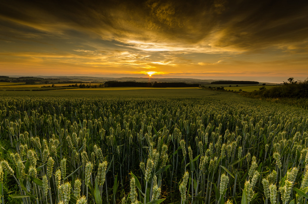 3d Home Hd Wallpaper In The Wheat Fields Decided To Head To Holy Island For