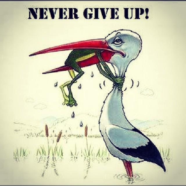 I Quit Wallpaper Hd Never Give Up Cartoon Moral Frog Crane Md Enamul
