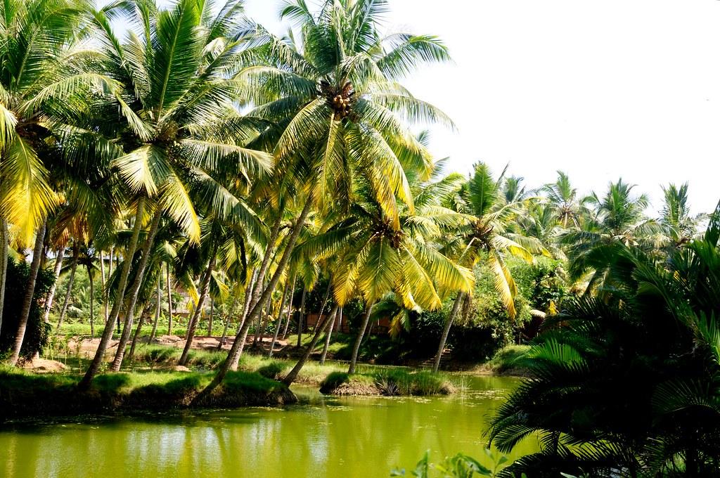 Hd Wallpapers Nature 3d Kerala Land Of Coconut Trees Kerala Nicknamed Gods