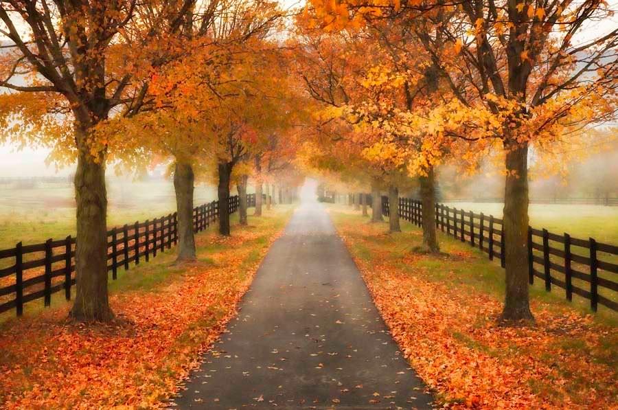 Hello Fall Wallpaper Autumn In Virginia Taken On A Foggy Misty Morning In