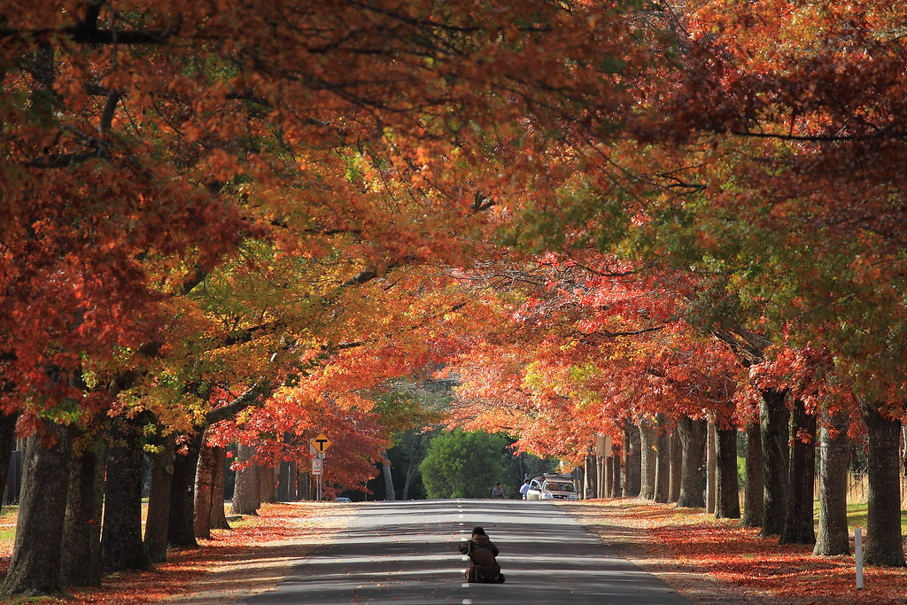 Fall Road Wallpaper Autumn Scenery @ Honour Avenue Macedon As Expected All