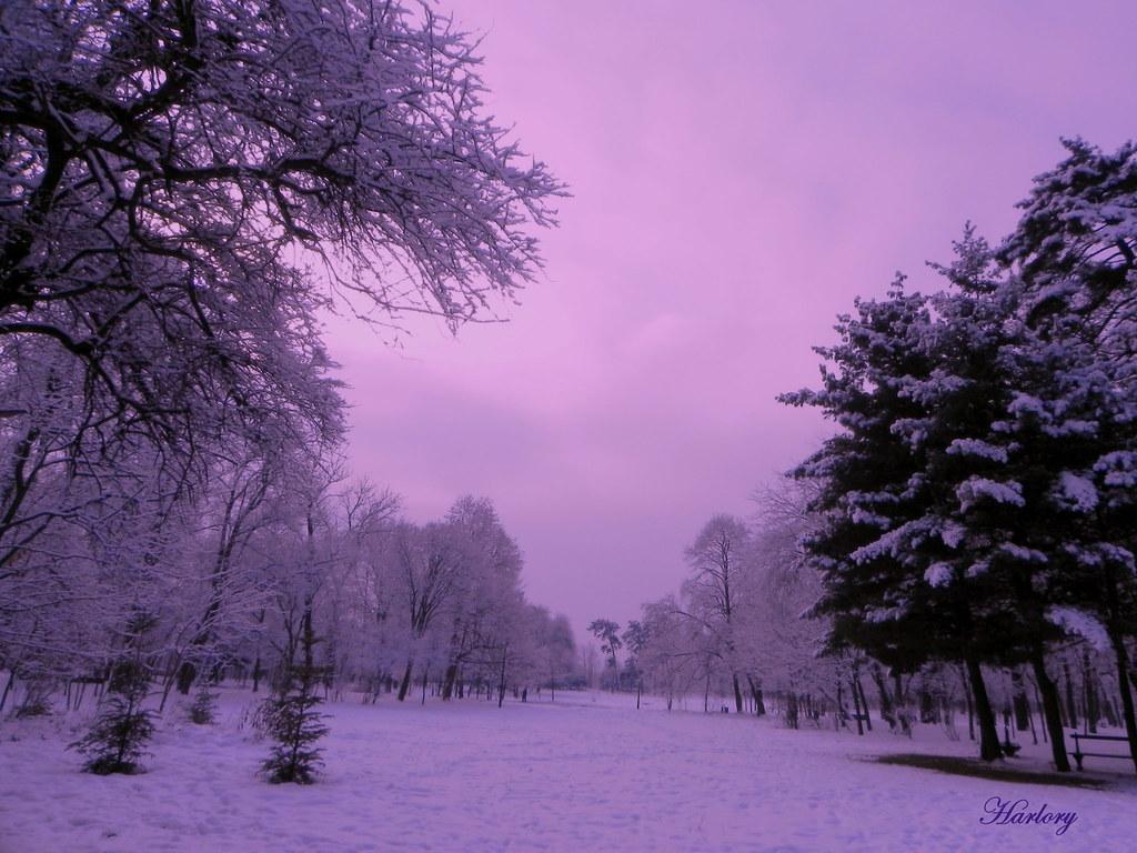 Purple 3d Wallpaper Purple Winter Hellena Lorelay Flickr