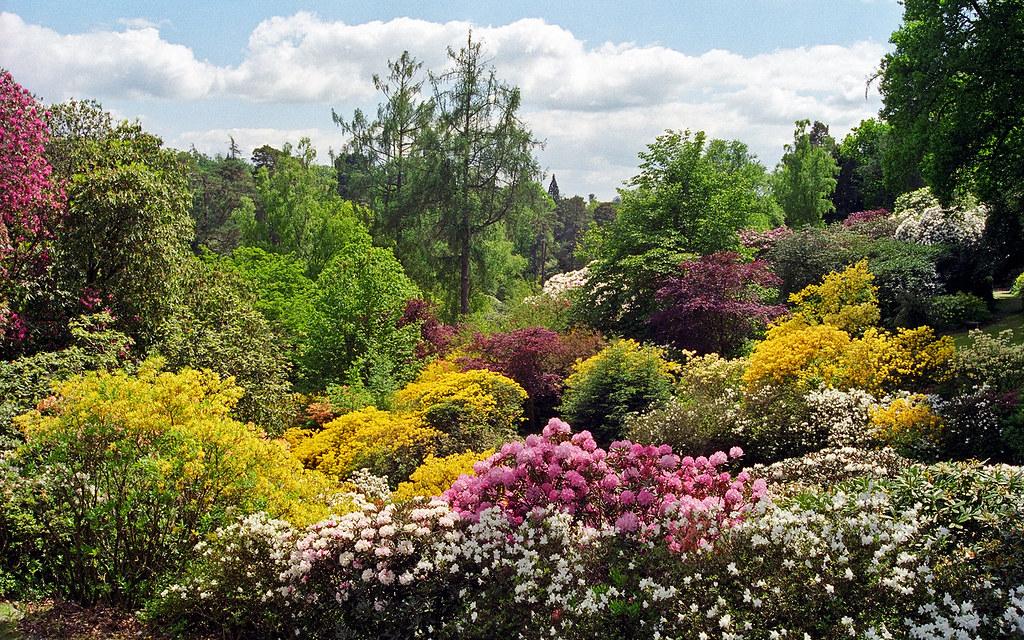 Wallpaper Nature Flowers 3d Leonardslee Gardens West Sussex Uk Landscape Garden Vi