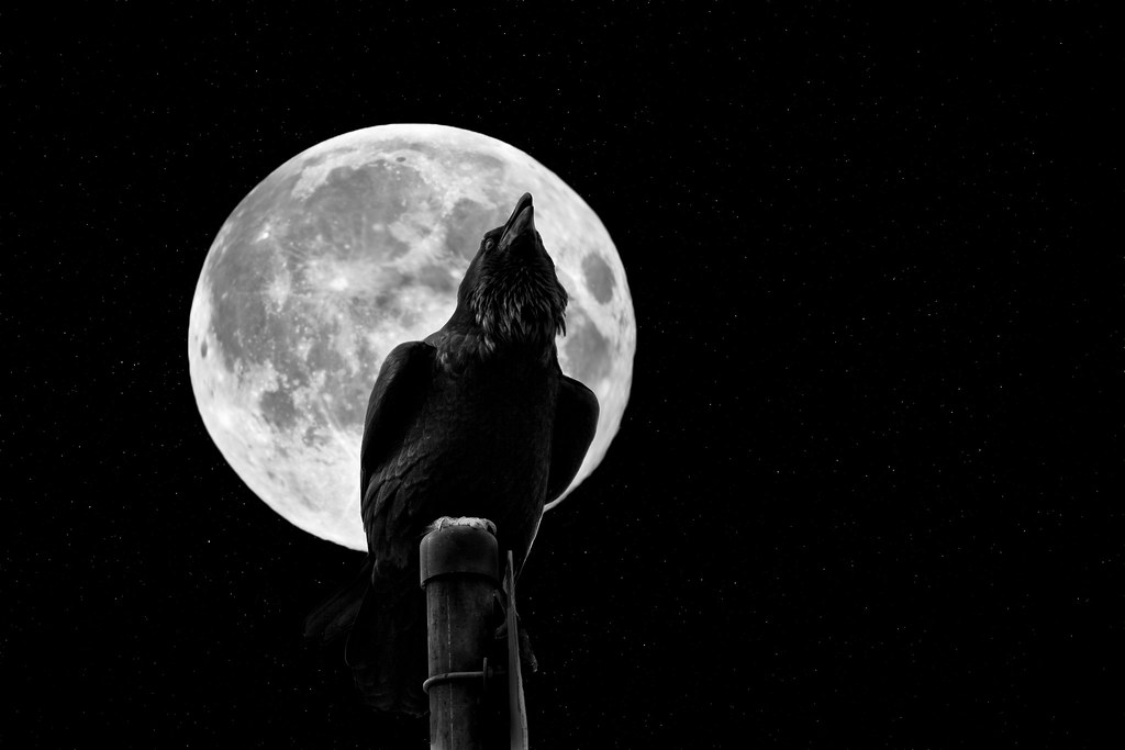 Hp Full Hd Wallpaper The Crow Amp The Moon Explored Www