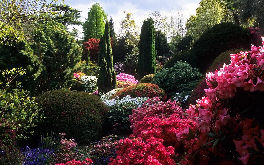 White Flower Wallpaper 3d Leonardslee Gardens West Sussex England Leonardslee Ro