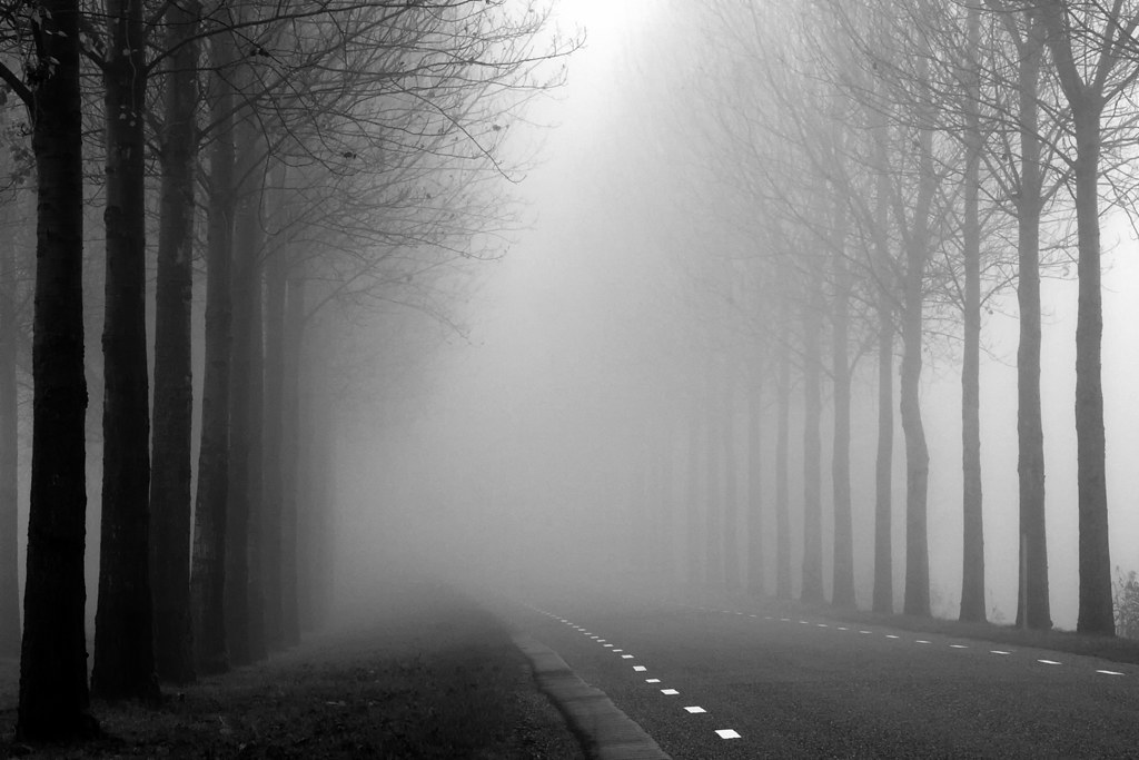 Background Wallpaper Quotes Foggy Road One From My Archives Typical Dutch Tree Lined