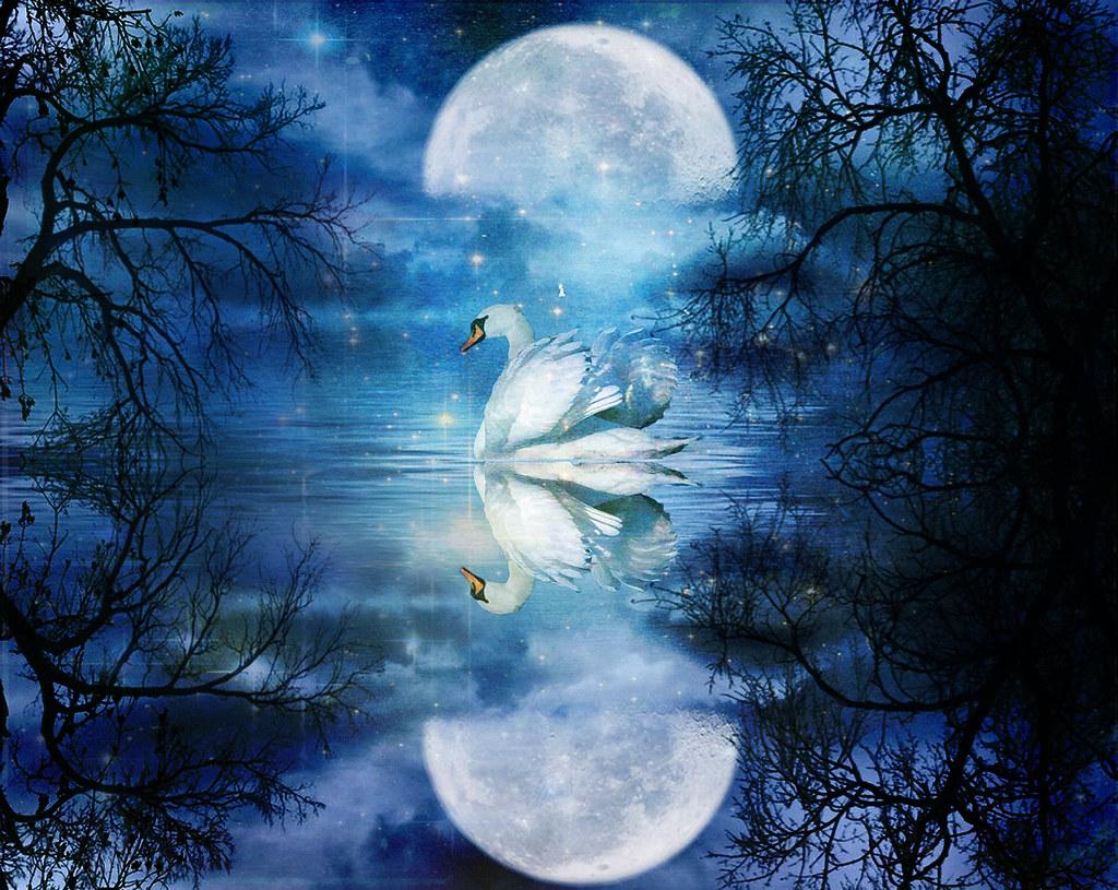 3d Rose Wallpaper For Mobile Cigno Al Chiarore Della Luna Swan In The Moonlight Flickr