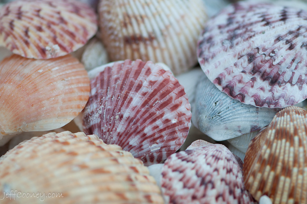 3d Beach Wallpapers Free Sanibel Sea Shells Sanibel Island On The West Coast Of