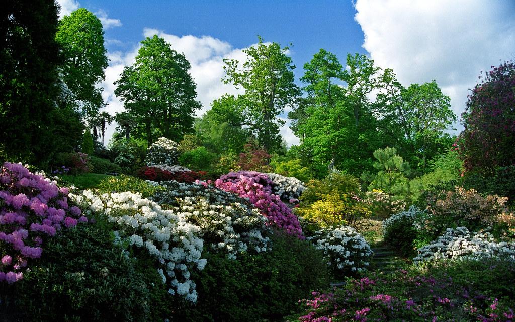 3d Wallpaper Natural Beauty Leonardslee Gardens West Sussex Uk Landscape Views Wi