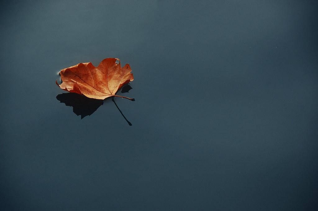 Desktop Wallpaper Fall Water Autumn Leaf On Still Water Blinking Idiot Flickr