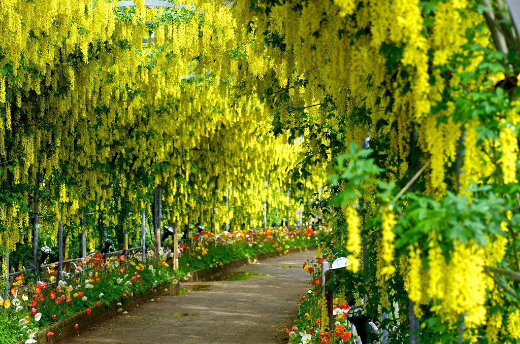 3d Tunnel Wallpaper Yellow Wisteria Tez Guitar Flickr