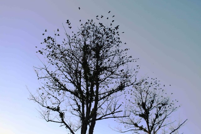 City Moment – A Colony of Birds, Lodhi Gardens