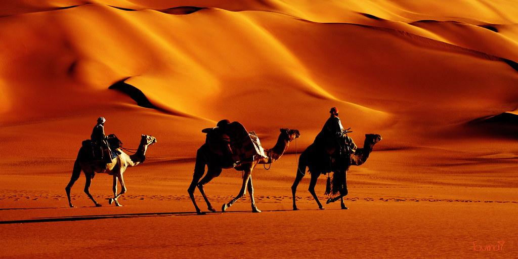 Wallpaper Sunset 3d Orange Nature Desert Sand Sahara Camel 405 Large Sig Flickr