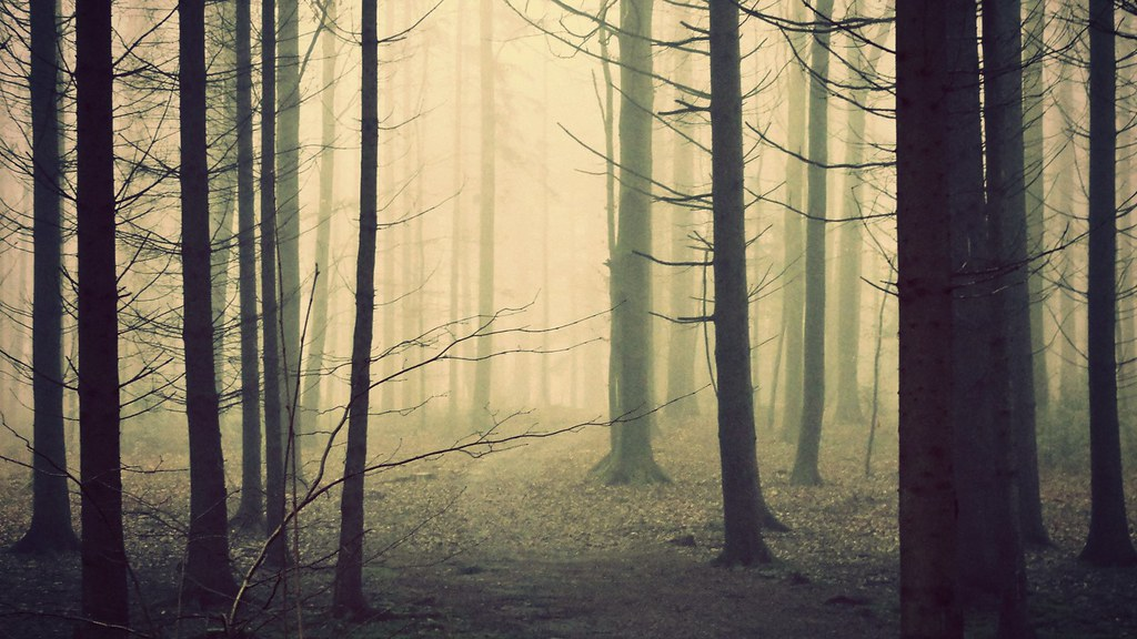 White 3d Wallpaper Hd Foggy Woods Press F To Fave If You Like Follow Me Here