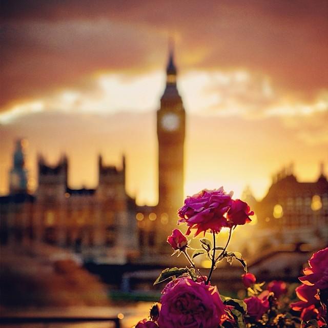 London England Iphone Wallpaper Sunday Again London Bigben Rose Sunset Nikon D600 F