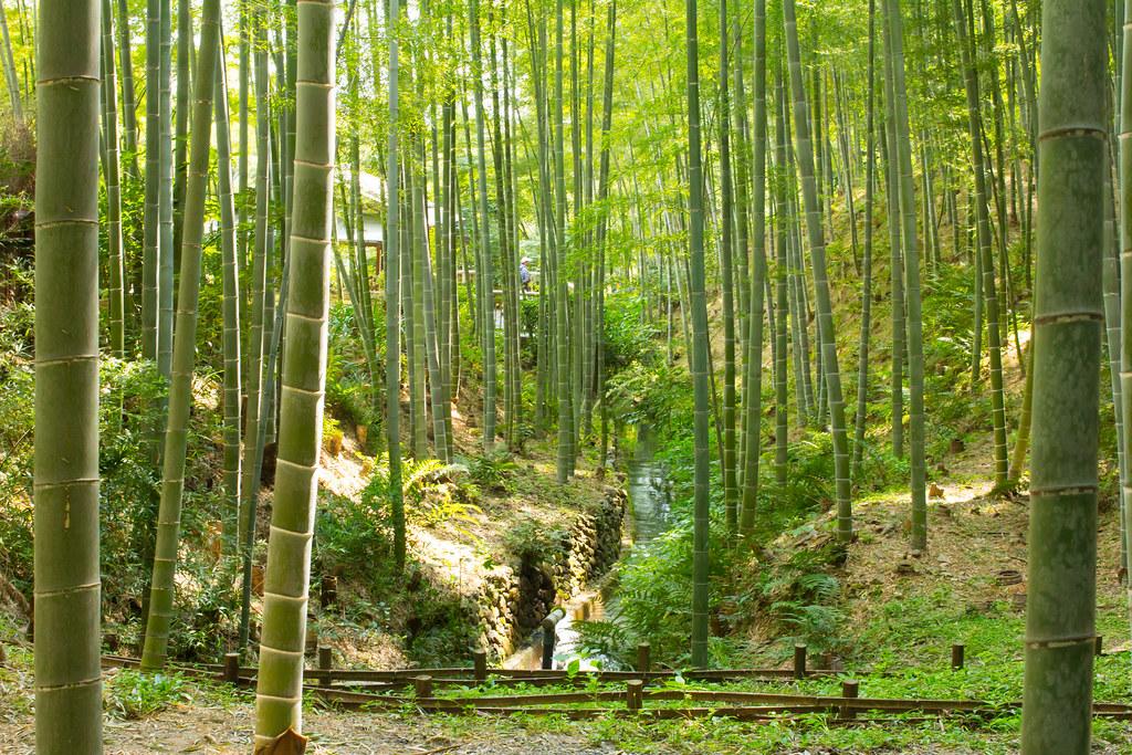 3d Wallpaper Desktop Background 嵐山・嵯峨野 竹林の道 Sagano Bamboo Forest Y Ganden Flickr
