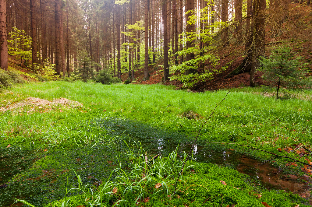 Cool Anime Wallpaper 3d Forest View Since There Is No Time For Photography At