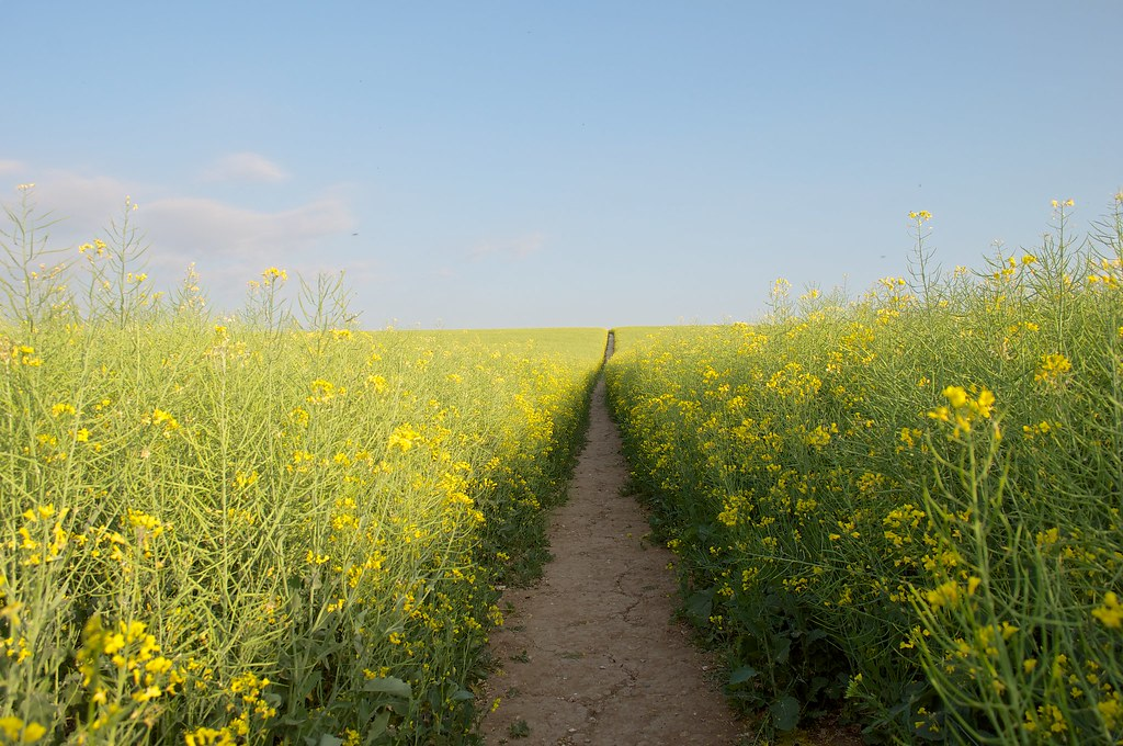 Summer fields 2