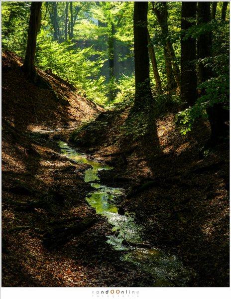Het water leidt vanuit de schaduwen naar een zonnige plek in het bos (56mm - ISO400 - f/9 - -1,6EV)