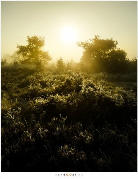 Zonsopkomst, mist, nandoonline, nando