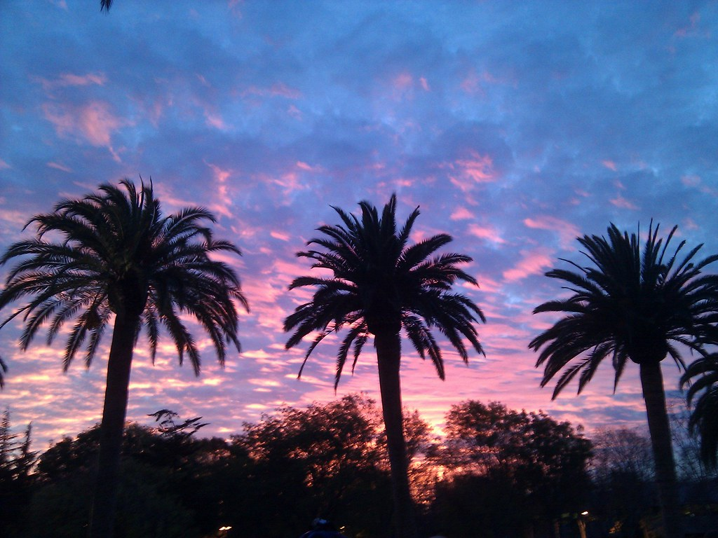 3d Colourful Wallpaper Palm Trees Googleplex Mountain View California