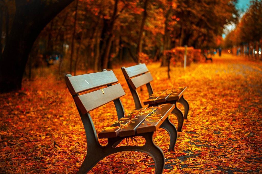 Imagen gratis de gratis de bancos de un parque en otoño