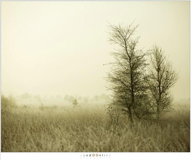 mist, ochtend, nando, nandoonline, strabrechtse heide