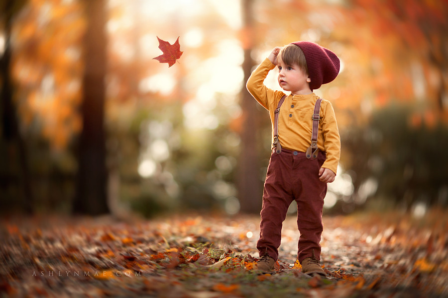 3d Free Fall Nature Wallpaper Observing Autumn Leaf Overlay From Bellevue Avenue