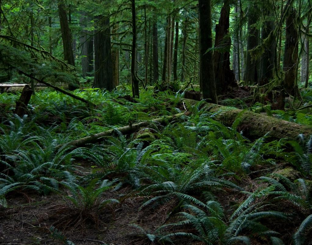 Rainforest Floor Robin Dawes Flickr