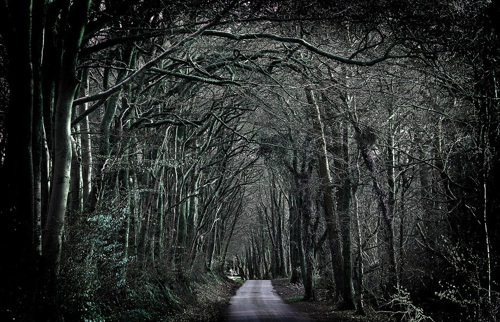 Forest Black And White Wallpaper Creepy Woods East Hill Nr Sidmouth Devon Uk Ian