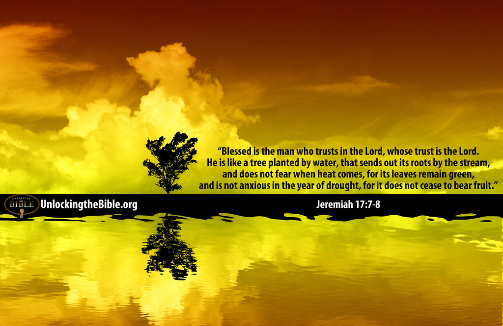 3d Bear Wallpaper Blessed Is The Man Who Trusts In The Lord Jeremiah 17 7
