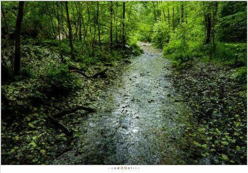Dit is niet de Ninglinspo, maar het pad dat evenwijdig aan het riviertje loopt, nat geregend door een felle regenbui (18mm - (auto)ISO12800 - f/8 - t=1/80)