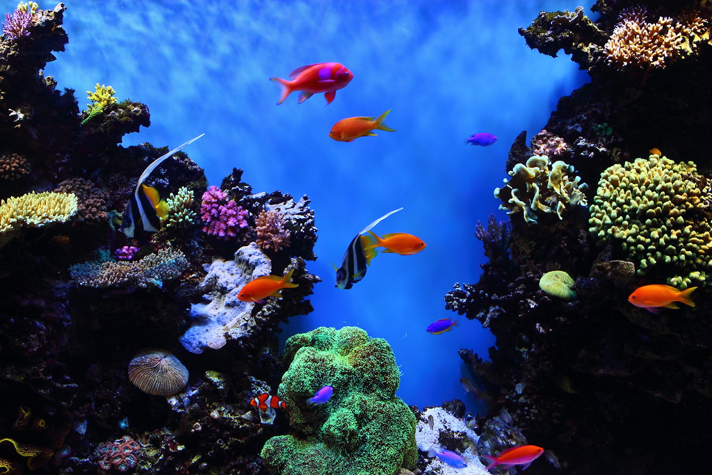 3d Fish Aquarium Live Wallpaper For Pc Tropical Fish At Monterey Bay Aquarium Taken At The