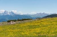 Villanderer Alm, Dolomiten im Hintergrund   Karlheinz ...