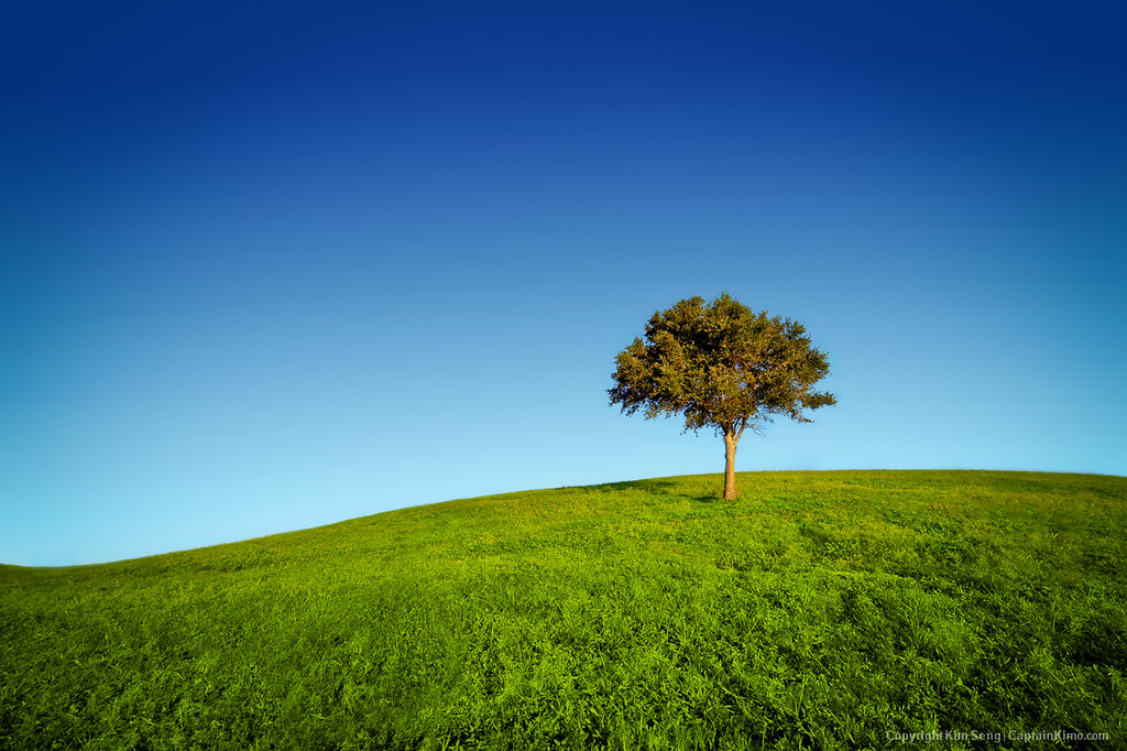 Beautiful Fall Pictures Wallpaper Lone Tree On Grassy Hill At Dyer Park Florida