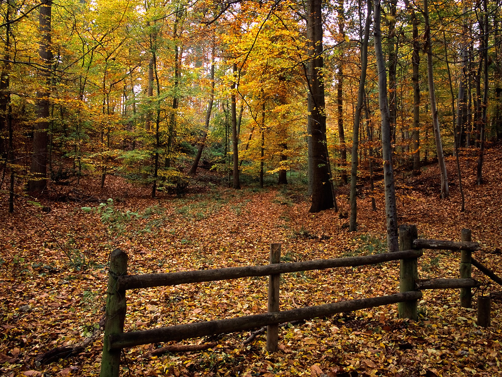 Fall Foliage Desktop Wallpaper Colors Of Autumn Ampthill Forest Bedfordshire Uk Aut