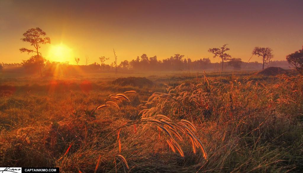 3d Wallpaper Portrait Last Day In Thailand Sunrise Over Rice Fields In Buri Ram